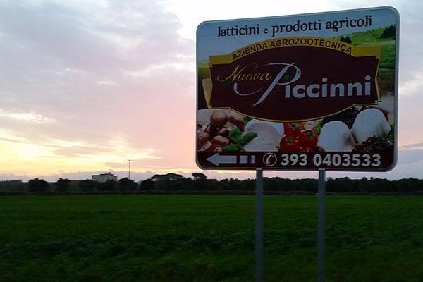 Nuova Piccinni