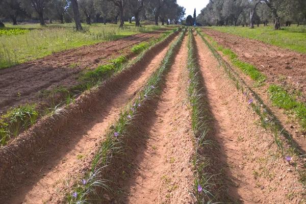 Azienda Agricola Pezzuto